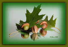 Oak Leaves & Acorns (glasowd9) Tags: redoak tabletop acorns goldenglobe mywinners oakleavesacorns
