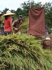 台灣的大屯溪自然農法教育農莊,以有機耕種示範另一種土地與人的關係,試圖開創台灣農業新生機。