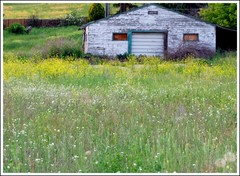 pastoral (tiffa130) Tags: house canada color green abandoned field barn landscape nikon britishcolumbia stock creative free commons vert cc creativecommons stockphotos dslr vernon stockphoto colorgreen delapitated nikoncamera freepics flickrstock tiffa photobytiffany nikondslr freestock 10millionphotos nikond40x d40x freestockphotos freestockphotography tiffanyday photosbytiffa photobytiffa