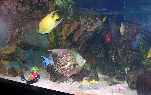 Mote Aquarium - Tropical Fish