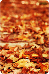 """""""Do not go where the path may lead, go instead where there is no path and leave a trail."""" ~Ralph Waldo Emerson (fraley_tera) Tags: leaves 50mm bokeh autumncolors explore leafpeepers roundedcorners natureycrap leavesbokeh bokehwhores fiddywhores fortheloveofbokeh danisactions hbwh bokehwednesdayhangover groupofroundedcorners daydreamaction newandsoontobereleasedfairytaleactionset"""