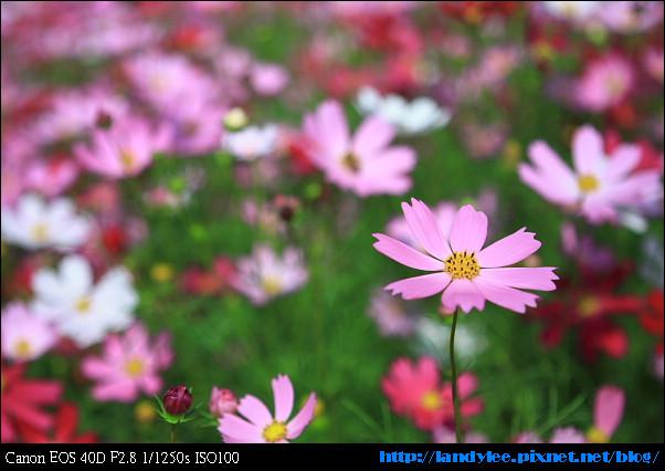 9711新社花海+安妮_012.jpg
