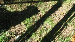 ME AND MY SHADOW: A GOOD FRIEND ALWAY NEARBY (roberthuffstutter) Tags: unsortedphotos introductions huffstutter americansnapshots viewsofusa bobhuffstuttersphotos roberthuffstuttersphotos assortedcoolsnapshots 1960sthrough2000 boxofoldphotos