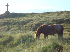 Llanddwyn (blogdroed) Tags: sea horse wales island cymru pony coastline footpath llanddwyn mr anglesey ceffyl llwybr ynys arfordir mn