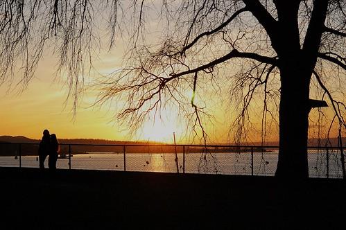 Solnedgang uten elg