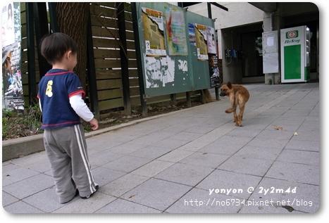 20081116_yonyon_026.jpg f