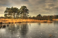 Herkenbosch (Bert Kaufmann) Tags: autumn winter lake holland fall ice nature landscape meer searchthebest herfst nederland nl paysbas ven hdr olanda roermond limburg niederlande ijs hollande meinweg herkenbosch rolvennen autumn2008images