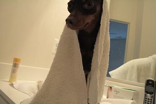 Poochie Bath Time!