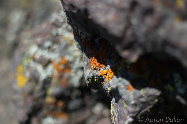 Lichens in the Shade
