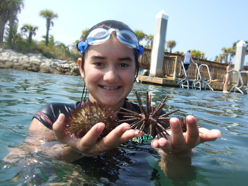 Julia finds 3 species of urchins
