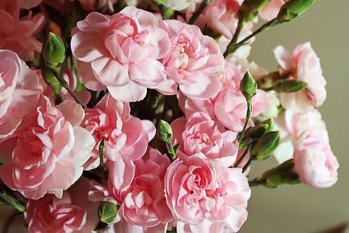 Valentine-Flower-Carnations