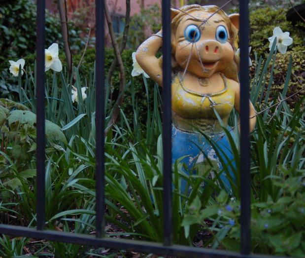 flower_daffodils_chalk_pig