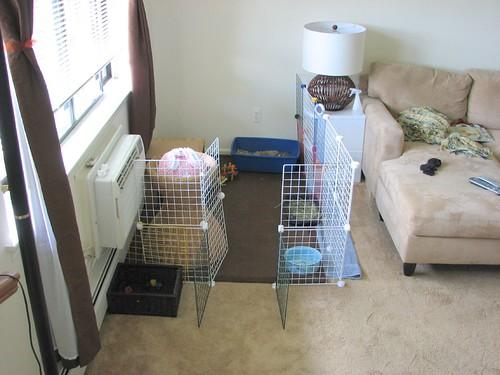 bunny prison 2