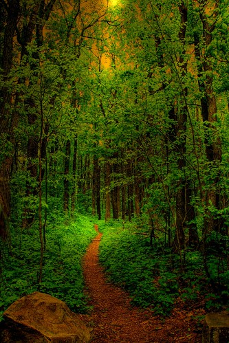 enchanted forest fantasy forests photos