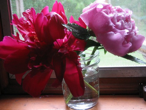 Peonies in a mason jar