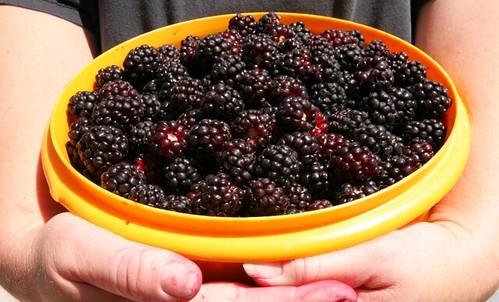 berris2