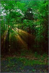 Presence of the Divine... (Moulik Desai) Tags: morning trees light sun sunlight nature dawn nikon divine foliage rays effect walkingtrail aetna d80