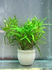 Thủy Sinh Tuấn Anh-Chuyên cây & Rêu Thủy Sinh, Cá Cảnh Biền & Hồ Cá Cảnh Biển - 37