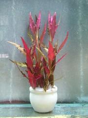 Thủy Sinh Tuấn Anh-Chuyên cây & Rêu Thủy Sinh, Cá Cảnh Biền & Hồ Cá Cảnh Biển - 24