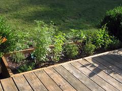 herb garden late spring
