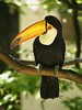 "Tucan • <a style=""font-size:0.8em;"" href=""http://www.flickr.com/photos/82096826@N00/2656731340/"" target=""_blank"">View on Flickr</a>"