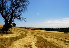 Harvest Time (swainboat) Tags: oregon rural scenery scenicsnotjustlandscapes