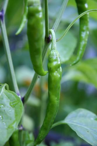 cayenne chiles