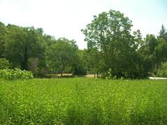 C'è un grande prato verde... (alfiererosso) Tags: verde green nature grass meadow natura campagna erba land greenery gras prato vegetazione grun countryland