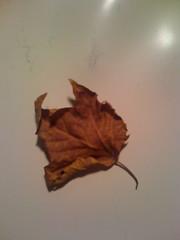 East Village Tree Leaf