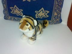 Irea's tiger cub 4