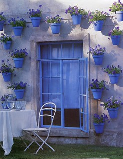 Blue Pots with Pansies