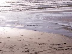 incoming (Mamluke) Tags: ocean sea summer vacation sun mer sunlight beach water oregon strand grit coast mar vakantie seaside sand aqua eau meer wasser mare waves estate pacific northwest wind sommer tide urlaub sable playa zee gritty arena pacificocean coastal zomer verano end pacificnorthwest tageslicht sunlit t acqua plage tidal vacaciones spiaggia vacanza vacance oceano zand  sabbia zonlicht beachside summercottage oceaan ocan ocano leau ozean roadsend lumiredusoleil luzdelsol mamluke coastaloregon lucesolare