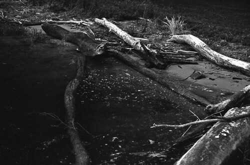 logs at the river's edge