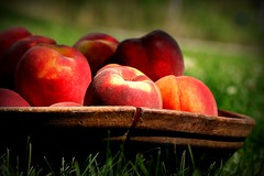 Grandma's Bread Bowl with Peaches (illinichick357) Tags: grandma summer memories utata peaches picnik breadbowl pfogold