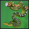 Northern Emerald Tree Boa (Corallus caninus) (Hamilton Images) Tags: canon searchthebest reptile snake august 2008 180mm coralluscaninus 40d img9848 captivebred northernemeraldtreeboa