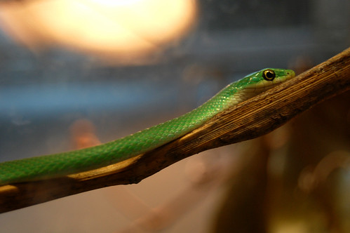 little green snake