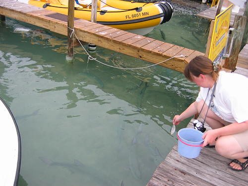 Feed the Tarpons (or Pelicans) at Robbie's on Islamorada