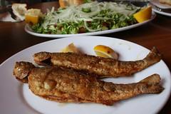 akçakoca balık