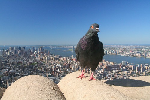 bird's eye view - Empire State building