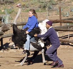 Riding the ostrich