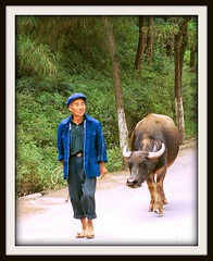 Chinese Water Buffalo Being Lead into the Year of the Ox - 2009 (buddhadog) Tags: china 2001 top oldman 1750 cw soe leading waterbuffalo pinnacle bdw sweeper buddhadog bigmomma yearoftheox 2960 golddragon challengeyouwinner 3waychallenge ultimateshot top100list pfogold friendlychallenges dragongoldaward friendlychallengewinner thechallengefactory flickr60 cwset 8wins herowinner pinnaclelost1r110 pregamewinner pregamesweepwinner pregameduelwinner 100mip