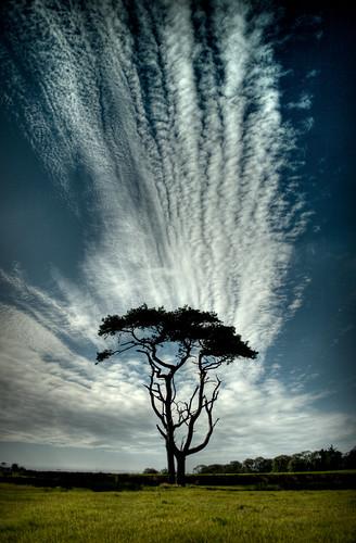 Margam Park Tree