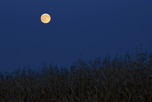 Harvest Moon by BleechBiPass