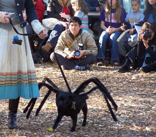 Spider-Dog desfile de disfraces
