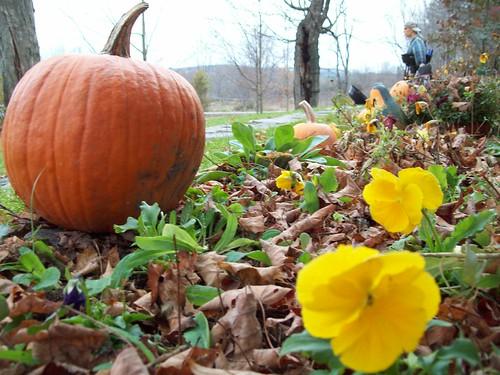 Orange Pumpkin and Yellow pansies