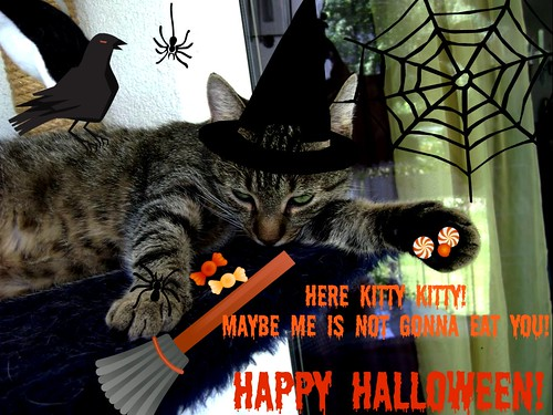 Happy Halloween from Salome!