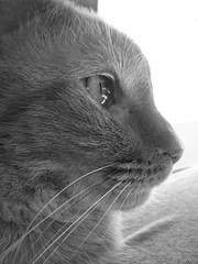 DSC01693 (cadams7216) Tags: cats pets animals kitties