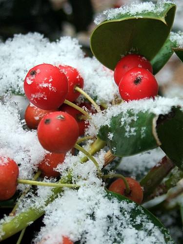 Snow!! Macro 365/236