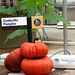 Cinderella Pumpkins, Living with the Land, Epcot - Walt Disney World