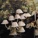 mushroom by dengski